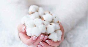 Pakistan Cotton & Product Update