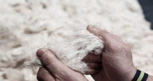 Qualitative Testing of Cotton