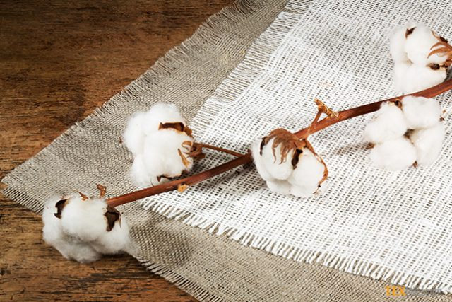 Meeting of Pakistan Central Cotton Committee