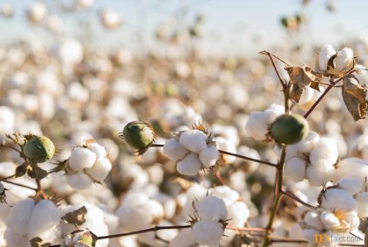 9.3 million cotton bales reach ginneries