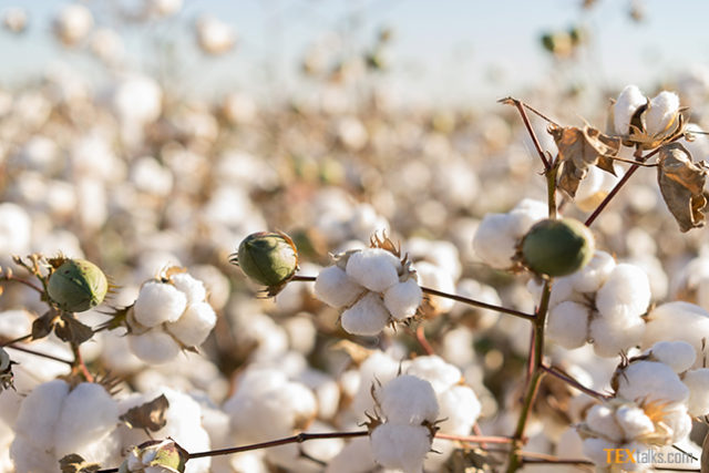 9.3 million cotton bales reach ginneries