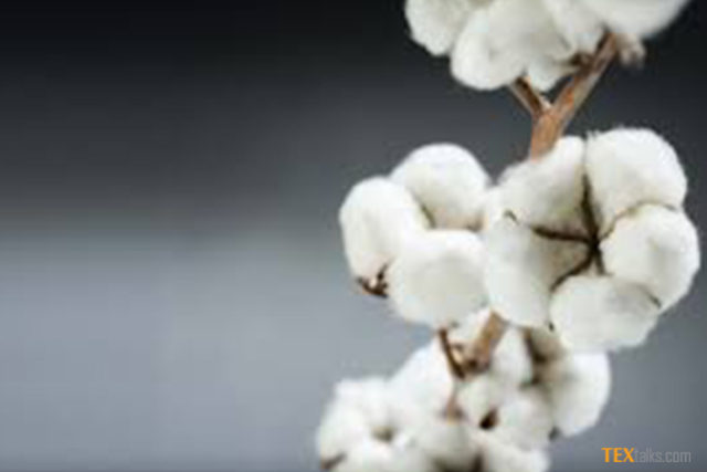India's cotton exports