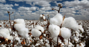 International Cotton Advisory Committee