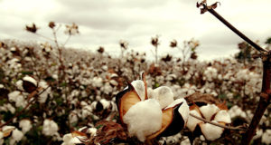 National Cotton Council of US