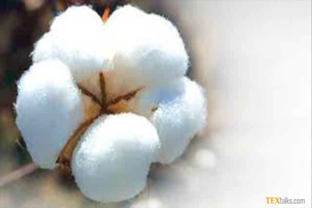 CAI retains 2017-18 cotton estimates
