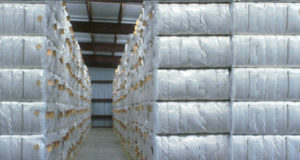 Pak ginneries receive 11.334mn bales of cotton