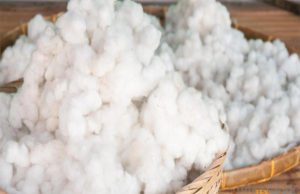 11.18 million cotton bales reach ginneries