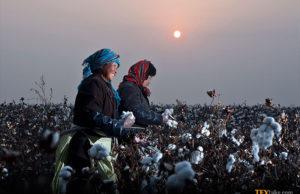 ICE cotton rises