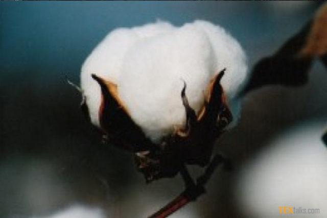 ICE cotton falls on profit-taking